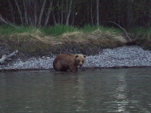 Brown Bear in the Sweet Spot