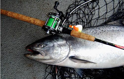 King Salmon on Abu Garcia and Red Hot